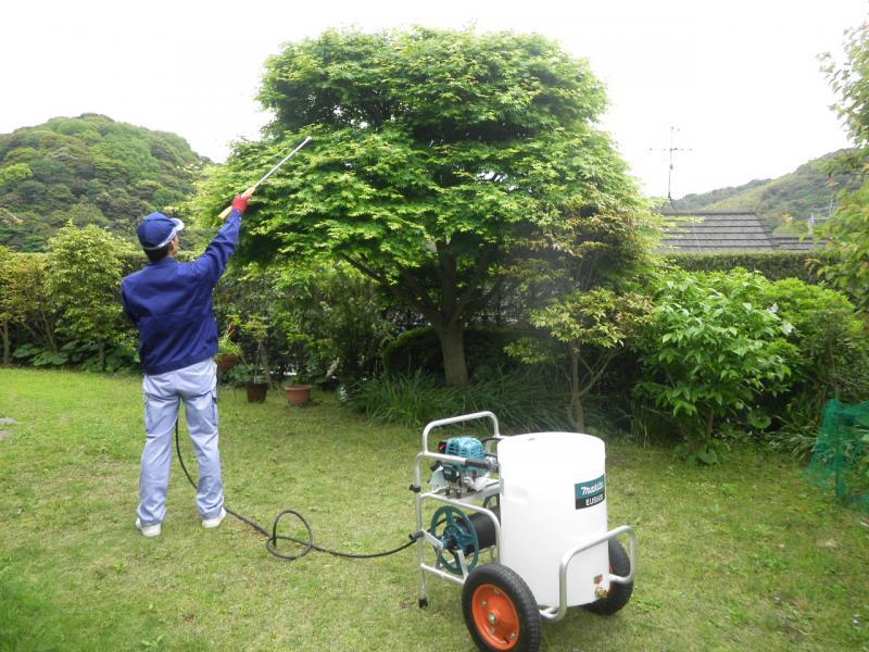 消毒(立木) 高さ 3〜5m (1本)