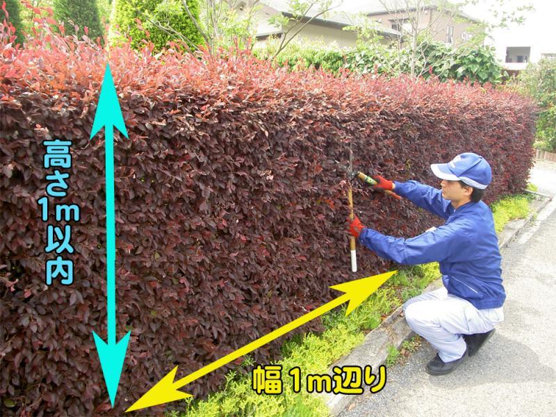 伸びすぎた植込みや生垣のカット<br>
