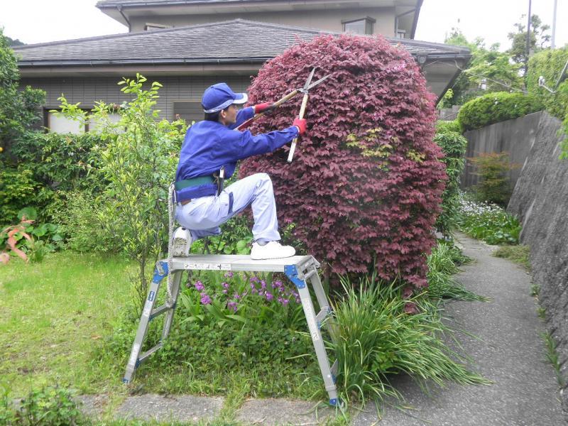 伸びすぎた枝葉の剪定、高さの調節を行います。   【 春(3・4・5月)にお手入れするべき木 】    ツバキ・サザンカ・ウメ・サクラ・ライラック・   ハナミズキ・サツキ・ツツジ etc…   冬から春にかけて咲く花木全般    (開花後のお手入れ)