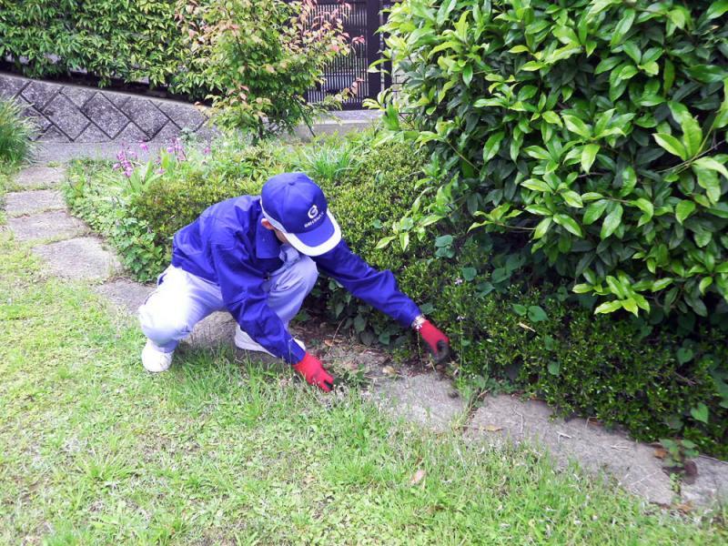 伸びすぎた草を 手作業で鎌などを使い刈り取ります。