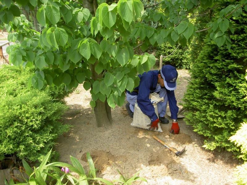 時期にあわせた肥料を施します。<br>