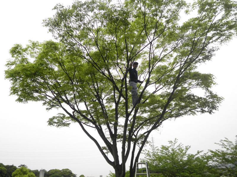 伸びすぎた枝葉の剪定、高さの調節を行います。<br><br>【 春(3・4・5月)にお手入れするべき木 】<br><br>  ツバキ・サザンカ・ウメ・サクラ・ライラック・<br>  ハナミズキ・サツキ・ツツジ etc…<br><br> 冬から春にかけて咲く花木全般 <br>   (開花後のお手入れ)<br><br><br><br><br><br><br>