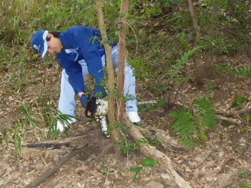 根本からの伐採、大きくなりすぎた樹木の幹途中までの半伐採など