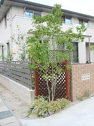 シンボルツリー ソヨゴ
