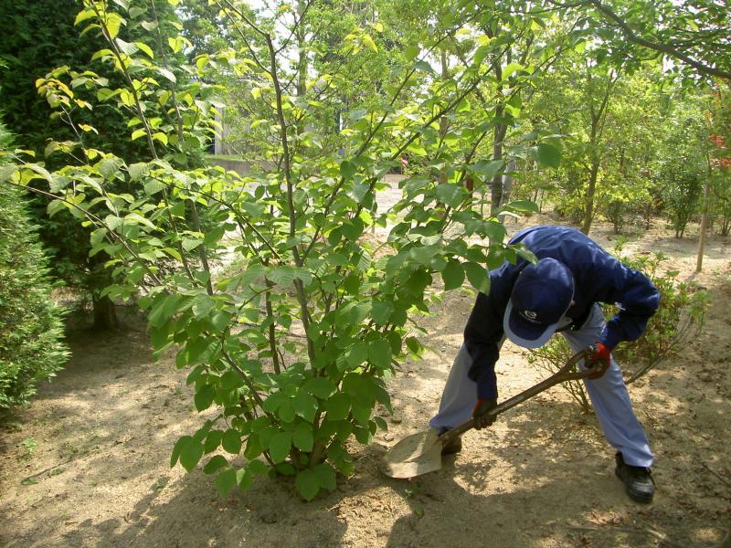 2月のお庭のお手入れ 『花木の植え替え』の写真1