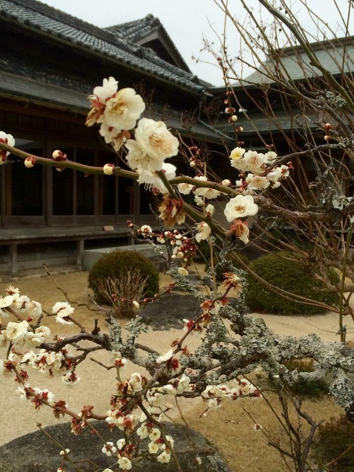 2月のお庭のお手入れ 『花木の植え替え』の写真2