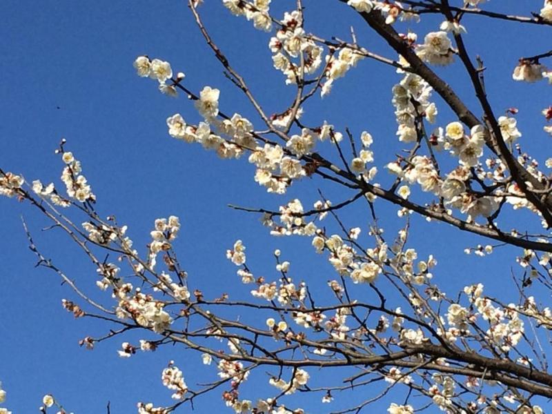 2月のお庭のお手入れ 『花木の植え替え』の写真3